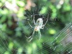 itsy bitsy spider by Commanding-photos