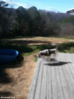 Speeded Doggie by cryas