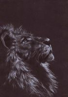 Lion on black paper by missivite