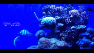 DSC01118Aquarium by RazielMB-PhotoArt