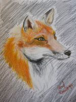 Fox by Adriellovesart