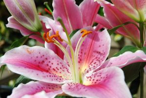 Luminescent Lilly by mr-macd