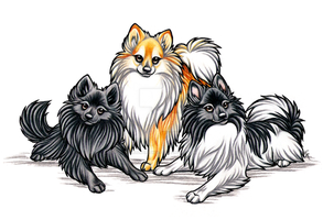 Three Pomerainian Commission by WildSpiritWolf