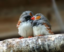 Two Finches by dark-angel-11309