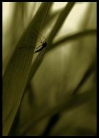 insect 2 by mikeb79