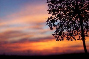 Painted Sunset by evalesco5