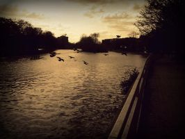 Birds Flying By The River. by sasha-sunshine0