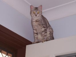 my crazy cat by Harlequin89