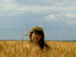 Conceit in the wheat by Biutz