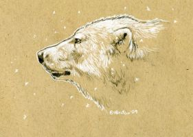 Brown Paper Polar Bear Sketch by Hbruton