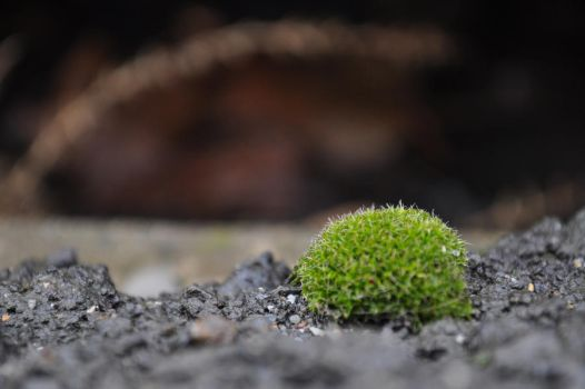 Cute Moss by Epictetus-is-Dead