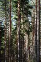 Magical Swedish Forest by newdynamic