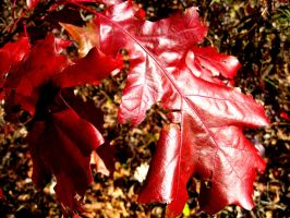 Leaves_5038 by Cubist-Assassin64
