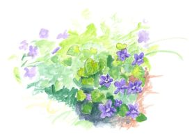 watercolor violets by kairanie