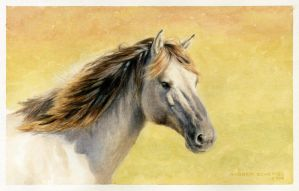 horse portrait - watercolor by AndreaSchepisi