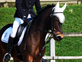 Competition dressage 3 by Driif