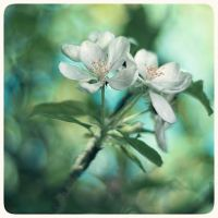Blossom - 5 by anjali