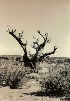 Tree Arms by 4the-ambient-light