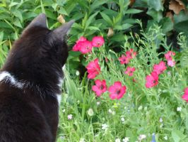 Cat flowers I by fairling-stock