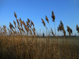 Grasses 02 by Dracofemi