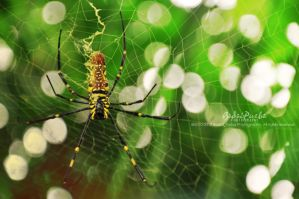 Thing wild - Spider by badaipurba