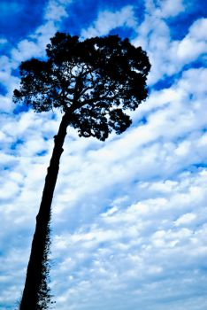 Caricature of Tree and Cloudy by drlightx