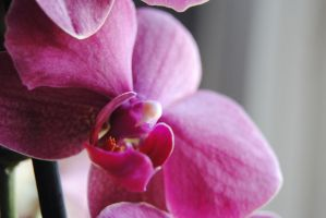 Orchids 1 by LetOurSpiritsNevrDie