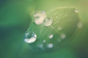 Green Sun II by JunnyPhotography