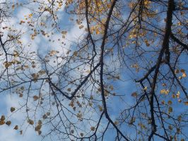 Sky Through Branches by RyanM90