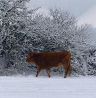 Harshness of Winter by jonway4