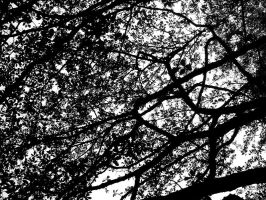 Branches by Dirt206