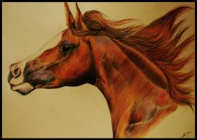 Arabian Horse 2 by Kermit-91