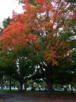 Fall Cemetery 12 by wyldangel-stock
