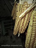 Want Corn by manyakkuzu