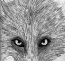 Wolf Eyes by Charmed-Wolf