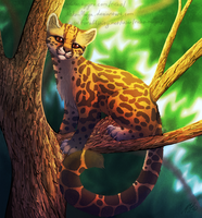 The Margay by Neotheta