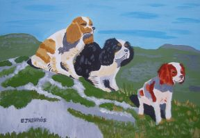 Three Dogs by wwwEAMONREILLYdotCOM