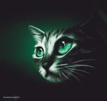 a cat with big eyes by Peace4all