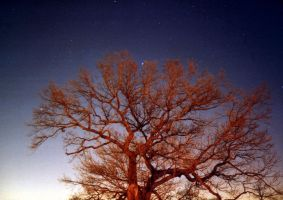 A tree at night by gmtb-stock