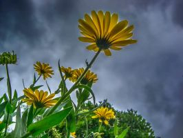 Storm Flower 2 by Bazz-photography