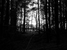 Through the woods... by iluvobiwan91