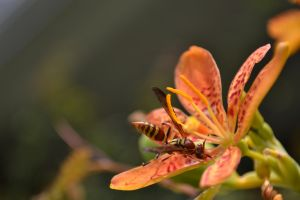wasp on flower by mossyfrog