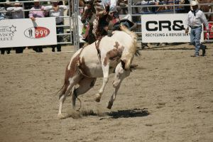 rodeo 34 by xbr0kendevotion