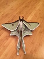 Luna Moth Soft Sculpture by mollyburgess