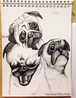 Pug Studies by AngelsMelodie
