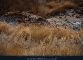 Golden Grass Preview by kuschelirmel-stock