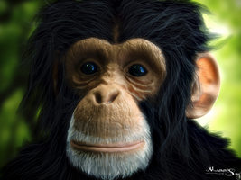 Chimp With Fur© by Massi-San