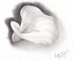 Calla Lily by EvanJenkins