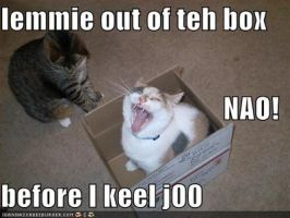 LOLCAT by Kithanna