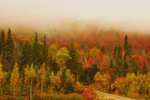 september colors II by Aimelle